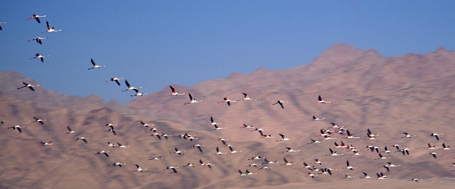 birds-e1391279160166