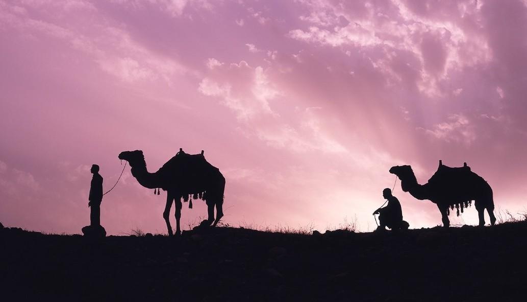 camels-e1391279420148
